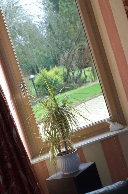 Quel style pour vos fenêtres ?